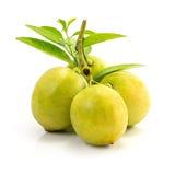 Fruit frais de citron Images stock