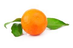 Mandarine avec des feuilles Photos libres de droits