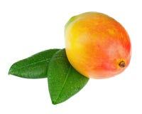 Fruit frais de mangue avec des feuilles de vert d'isolement sur le fond blanc Image stock