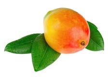 Fruit frais de mangue avec des feuilles de vert d'isolement sur le fond blanc Photographie stock libre de droits
