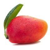 Fruit frais de mangue avec des feuilles de vert d'isolement sur le fond blanc Images libres de droits