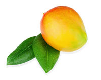 Fruit frais de mangue avec des feuilles de vert d'isolement sur le fond blanc Photos stock
