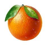 Fruit frais orange avec deux feuilles et gouttelettes d'eau, au fond blanc. Image stock