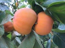 Fruit frais organique Image libre de droits