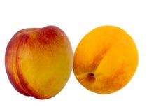 Fruit fresh Stock Image