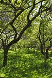 Fruit garden, Armenia Royalty Free Stock Photography