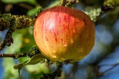 Fruit in garden Stock Photos