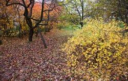 Fruit garden late in autumn Stock Image