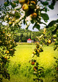 Fruit Garden With Country Side View Stock Images