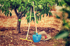 Fruit garden Stock Photography