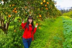 fruit garden stock photos