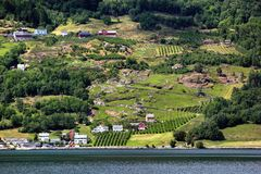 Fruit gardens on coasts of the Hardanger fjord, Norway royalty free stock photography