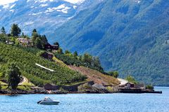 Fruit gardens on coasts of the Hardanger fjord, Norway royalty free stock photos