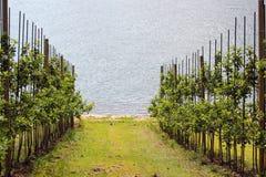 Fruit gardens on coasts of the Hardanger fjord, Norway royalty free stock photo