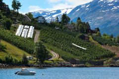 Fruit gardens on coasts of the Hardanger fjord, Hordaland county, Norway stock image