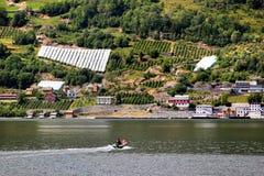 Fruit gardens on coasts of the Hardanger fjord, Hordaland county, Norway stock photo