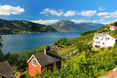 Fruit gardens on coasts of the Hardanger fjord, Hordaland county, Norway.  stock photo