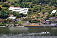 Fruit gardens on coasts of the Hardanger fjord, Hordaland county, Norway royalty free stock photos