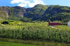 Fruit gardens in Lofthus, near the Hardanger fjord, Hordaland county, Norway.  stock photo