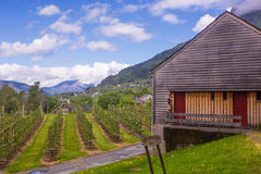 Fruit gardens at Ulvik, Norway Royalty Free Stock Photo
