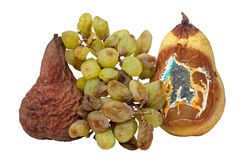 Fruit gaspillé Images stock