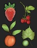 Fruit grafisch van aardbei, framboos, perzik, en druif Stock Afbeeldingen