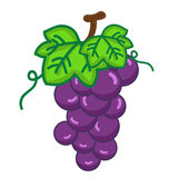 Fruit Grapes isolated illustration Royalty Free Stock Photography
