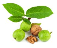 The fruit of green and mature walnut. Isolated on white background Stock Photography