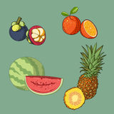 Fruit and half fruit collection vector Royalty Free Stock Image