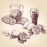 Fruit - hand drawn collection, Royalty Free Stock Photos