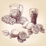 Fruit - hand getrokken inzameling, Royalty-vrije Stock Foto's