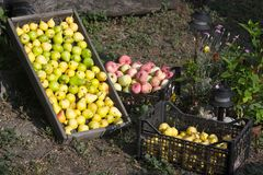 Fruit harvest 01 Stock Images