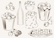 Fruit harvest. Set of vector sketches of ripe fruit harvested for the production of homemade wine Stock Images