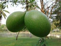 Fruit in het park Royalty-vrije Stock Foto's