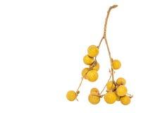 Fruit I de plot réflectorisé Photo stock