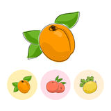 Fruit Icons, Apricot, Peach, Melon Stock Photography