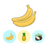 Fruit Icons, Banana, Pineapple , Coconut Stock Photos