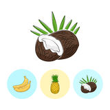 Fruit Icons, Coconut ,Pineapple ,Banana Royalty Free Stock Image