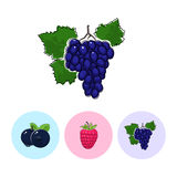 Fruit Icons, Grapes ,Raspberries ,Blueberries Royalty Free Stock Images