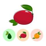 Fruit Icons, Mango ,Avocado , Grapefruit Royalty Free Stock Photo