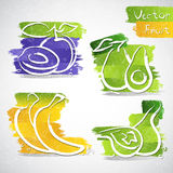 Fruit icons. Vector illustration of colorful fruit icon collection Royalty Free Stock Photo