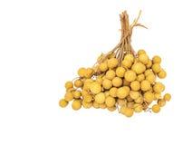 Fruit II de plot réflectorisé Photographie stock