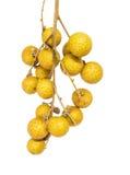 Fruit III de plot réflectorisé Photos libres de droits