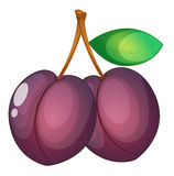 Fruit illustration Royalty Free Stock Photo