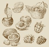 Fruit - illustration Royalty Free Stock Photography