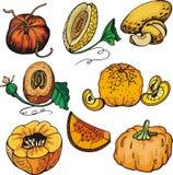 Fruit illustration series Stock Photo