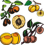 Fruit illustration series Royalty Free Stock Photography