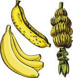 Fruit illustration series Royalty Free Stock Image