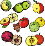 Fruit illustration series Stock Images