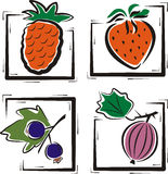 Fruit illustration series. A set of 4 vector illustrations of figs and cherries Stock Images